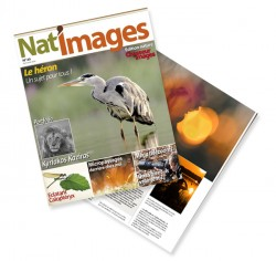 natimages-25