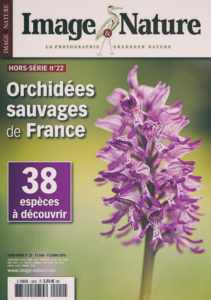 image-et-nature-orchidee-sauvages