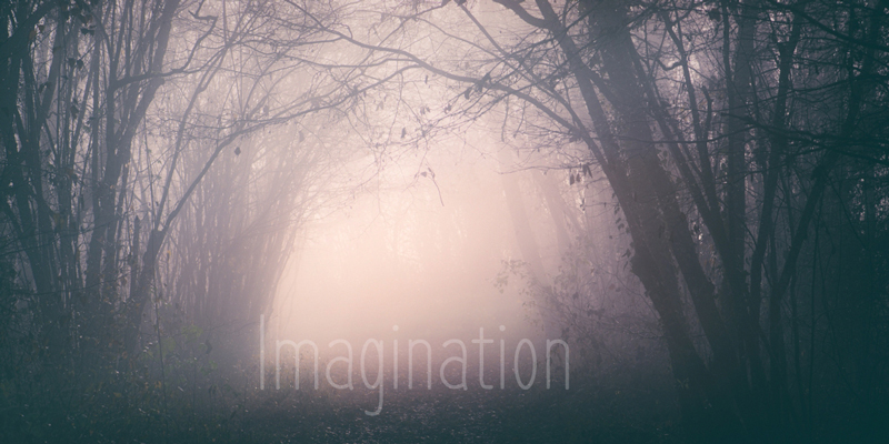 Nature en lien, stages photo intuitive